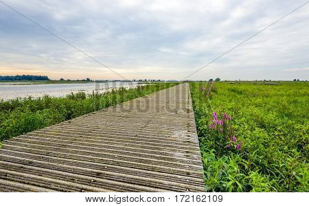 Narrow wooden footbridge made of planks over the vegetation of a Dutch nature reserve. It is early in the morning of a cloudy day in the summer season.