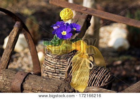 detail of nice blue primrose in a wicker hand-knit boot with a yellow ribbon on a old rust wooden track
