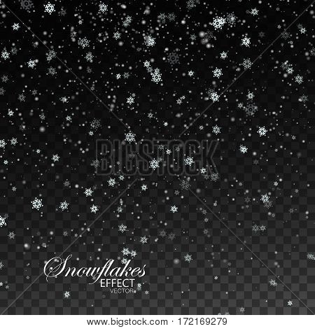 Snow falling background. Vector Christmas illustration of snowflakes and sparkles. Snowflakes falling down isolated on transparent checkered background. Holiday decoration element for design