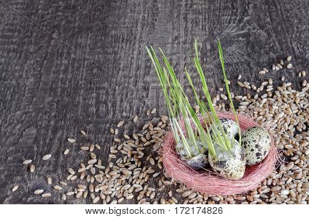 The background of the old wooden surface with quail egg, sprouts and wheat. Plenty of space for text.
