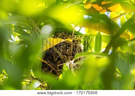 Natural bird nest on the bush of high tree