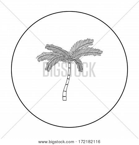 Mexican fan palm icon in outline style isolated on white background. Mexico country symbol vector illustration.