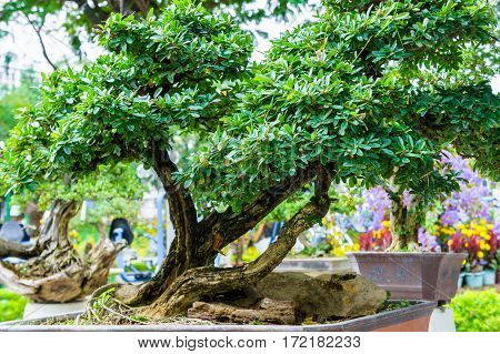 Green Bonsai Tree In Garden