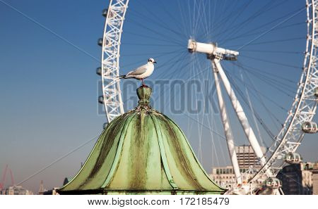 white seagull and London Eye in the background on a sunny summer day in London, UK