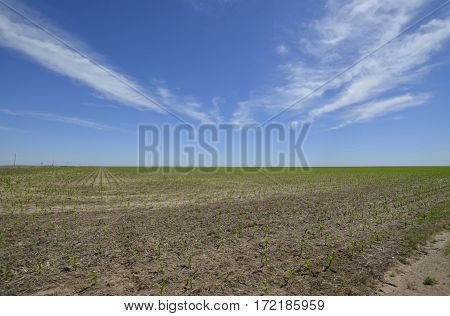 Open space rural countryside and dry farmland and horizon in the sunny summertime