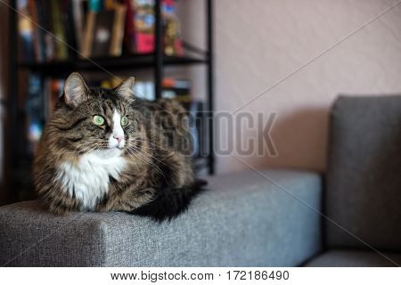 cat lying on the couch. Cat relaxing near the bookcase.