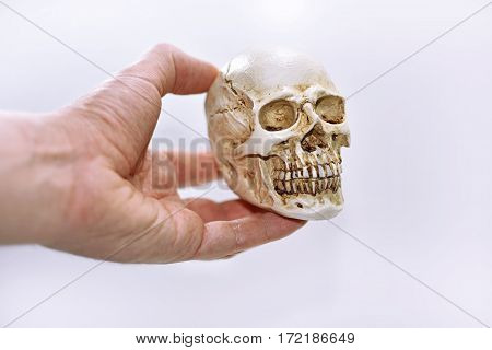 Small decorative human skull. Isolated on white background.