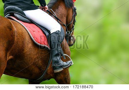 Horse riding closeup in a summer season