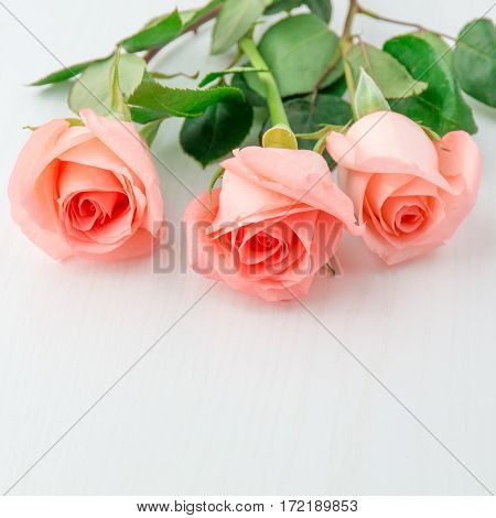 Three pink coral rose on white wooden table with copy space. selective focus