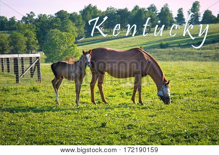 Kentucky card. Horses at horse farm at golden hour. Country summer landscape.