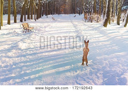Dog on hind legs in winter in the alley looking for ... Grief, despair, waiting.
