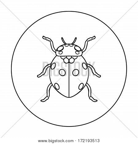 Ladybug icon in outline design isolated on white background. Insects symbol stock vector illustration.