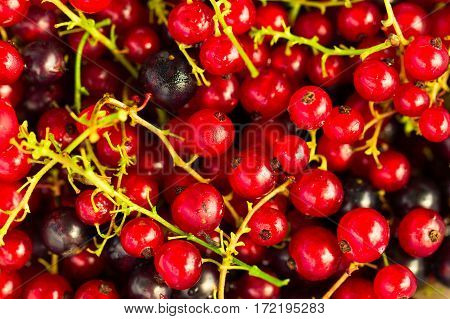 Fresh Ripe Currant Berries Bowl On Wooden Table Background
