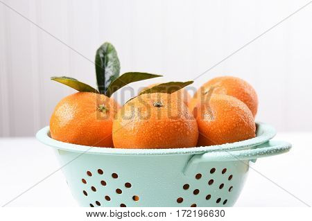 Closeup of a colander filled with fresh picked mandarin oranges.