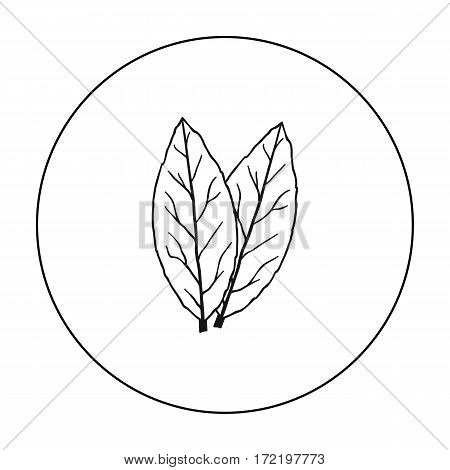 Laurus icon in outline style isolated on white background. Herb an spices symbol vector illustration.