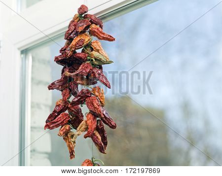 Bunch of red hot dried pepper hanging next to a window selective focus indoor shot