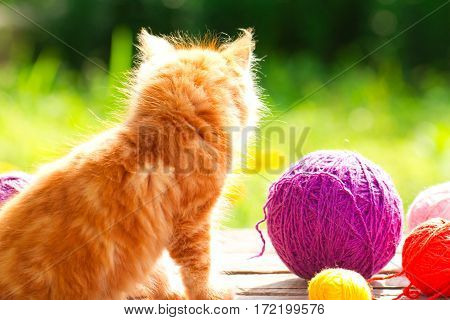 Little Red Playful Kitten With A Wool Of Thread On The Outdoors