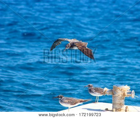 Seagull Flying By The Sea Side / Seagull Flying By The Sea Side With The Background Of The Ocean And