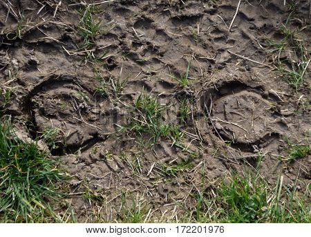 Horseshoe prints in mud and grass on bridle way. Landscape