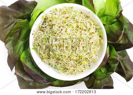 Alfalfa Sprouts Into A Bowl