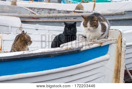 the fishing boats and big marine cats