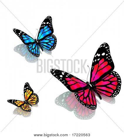 three butterflies on a white background