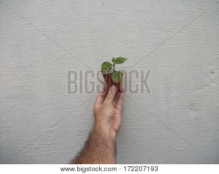 Miniature plant held in hand on gray background