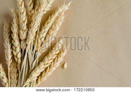 Wheat ears on craft paper vintage background