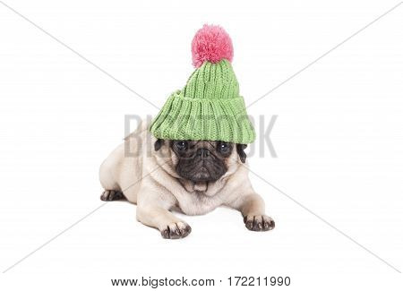cute pug puppy dog lying down and looking grumpy wearing green knitted hat with pink pompom isolated on white background