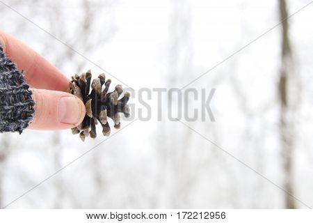 winter holidays background, man holding a fir cone in hand