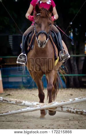Horse jumping and running.Horse jumping and running.