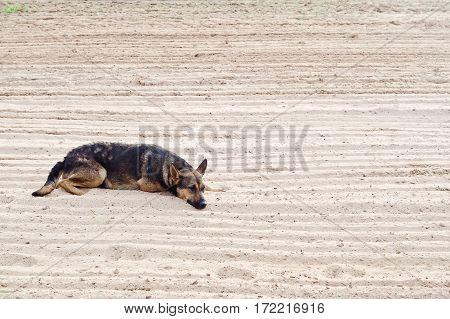 Ugly Dog Sad On The Beach