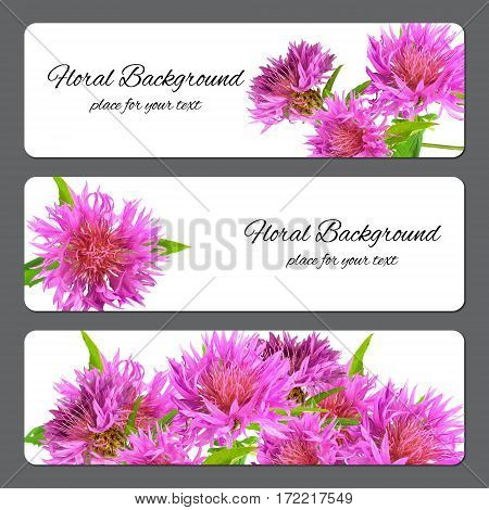 Background Texture Made Of Cornflower And Place For Text