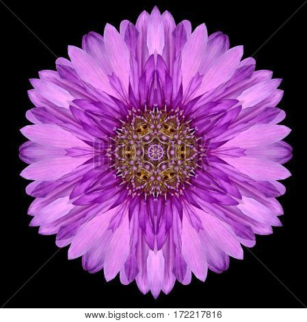 Purple Mandala Flower Kaleidoscope Isolated On Black