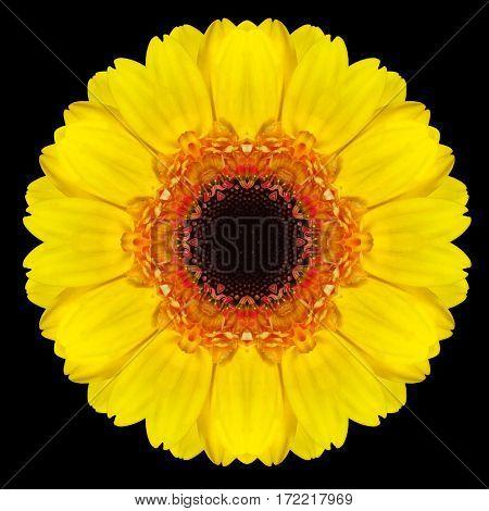 Yellow Flower Mandala Kaleidoscope Isolated On Black
