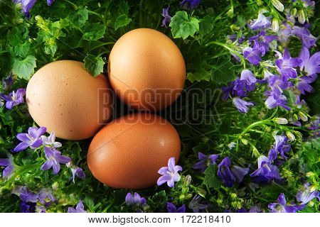three easter eggs in a egg shaped nest of bluebell flowers isolated on a white background