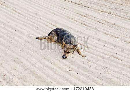 Ugly Dog Be Sad On The Beach