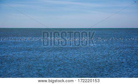 Many Seagulls Flying On The Black Sea , Poti, Georgia