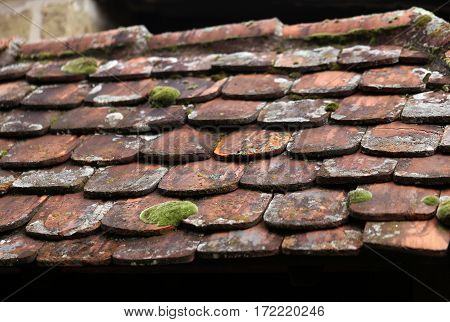 Roof / A roof covered with red tiles