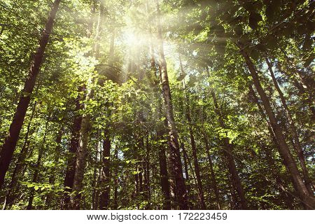 The sun's rays make their way through the tree crown