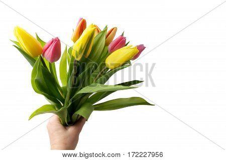 Hand holding colorful tuplis on the white background