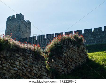 Poppy flowers on old ruined wall below Kalemegdan fortress in Belgrade, Serbia