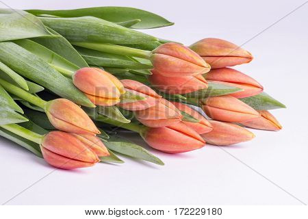 Bunch of Peach Color Tulips Close Up