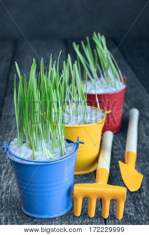 Seedling herbs in colorful buckets and tools to take care of them. Selective focus blue-gray background.