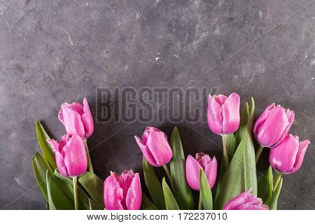 Pink tulips on gray abstract background. Pink tulip. Tulips. Flowers. Flower background. Flowers photo concept. Holidays photo concept. Copyspace