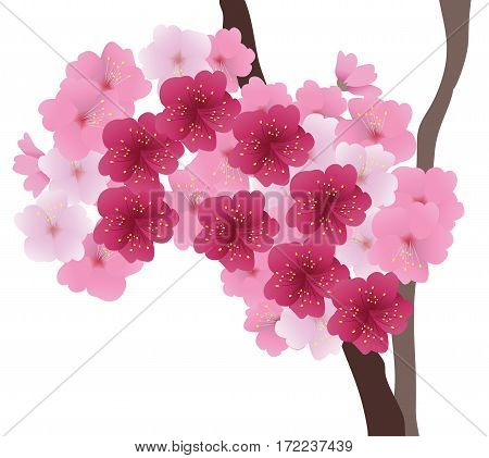 vector illustration of cherry blossom floral background