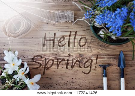 English Text Hello Spring. Sunny Spring Flowers Like Grape Hyacinth And Crocus. Gardening Tools Like Rake And Shovel. Hemp Fabric Ribbon. Aged Wooden Background