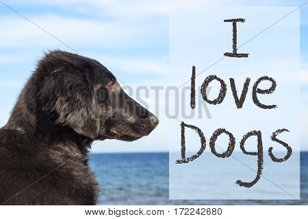English Text I Love Dogs. Flat Coated Retriever Dog Infront Of Ocean. Water In The Background