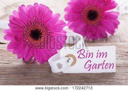 Label With German Text Bin Im Garten Means I Am In The Garden. Pink Spring Gerbera Blossom. Vintage, Rutic Or Aged Wooden Background. Card For Spring Greetings.