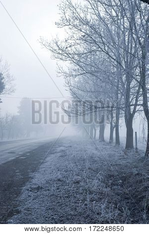 Trees in winter when the road. Мorning fog